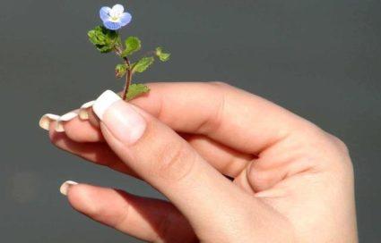 Накладные ногти сделают ваши пластинки длинными практически мгновенно