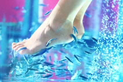 процедура с рыбками оказывает благотворное влияние на ножки