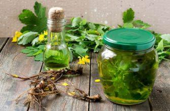 В народных рецептах описаны множество трав и растений