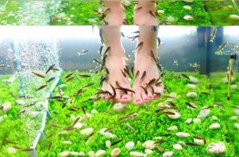 Новое слово в технологии педикюра - экзотические рыбки